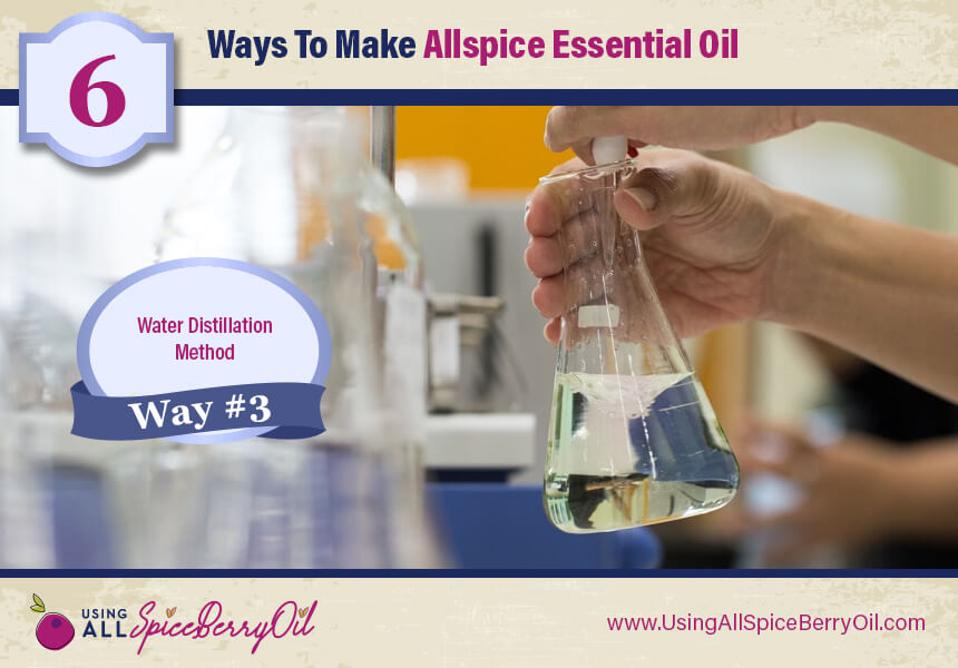allspice oil distillation