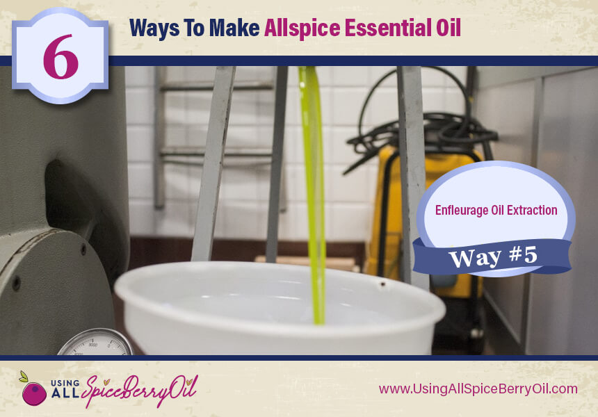 allspice oil irritation